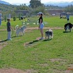 Philadelphia-Area Dog Parks Green-Light Off Leash Program