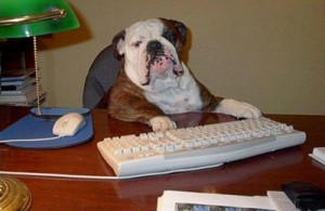 Dog at Work 300x195 dogs allowed at 1 in 5 work places in the u s all pet news