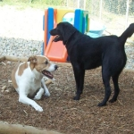 Tips to Choose the Best Pet Boarding Kennel