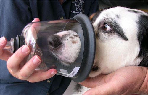 Canine Company Donates Pet Oxygen Masks To 60 More Communities