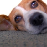 Tips For Pet Owners To Keep Carpets At Their Cleanest