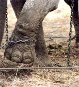 Enjoy the Circus? The Animals Don'-t.