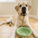 Salmonella Poisoning In Pet Food
