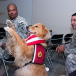 Therapy Dogs: How Do They Help?