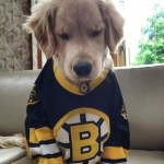 Meet Ray Charles: a Bruins Loving Blind Puppy