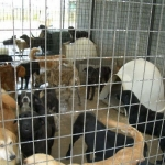 Animals abandoned, rejected, and hoarded … by 'no-kill' shelters