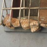 Cat across bars