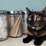 Hyperthyroid Cat