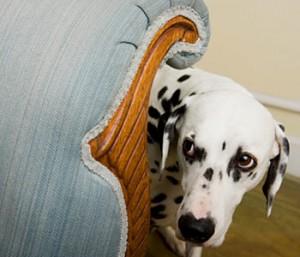 global fear in dogs