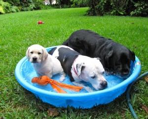 16 Ways To Keep Pets Cool