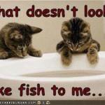 Not Fish