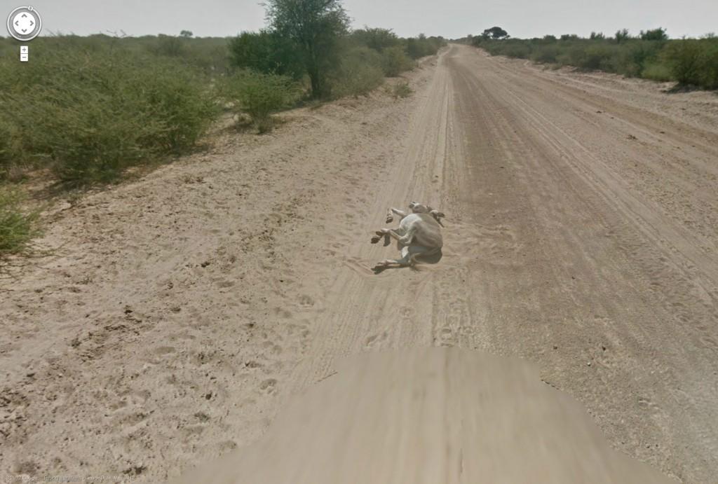 google streetview runs over donkey