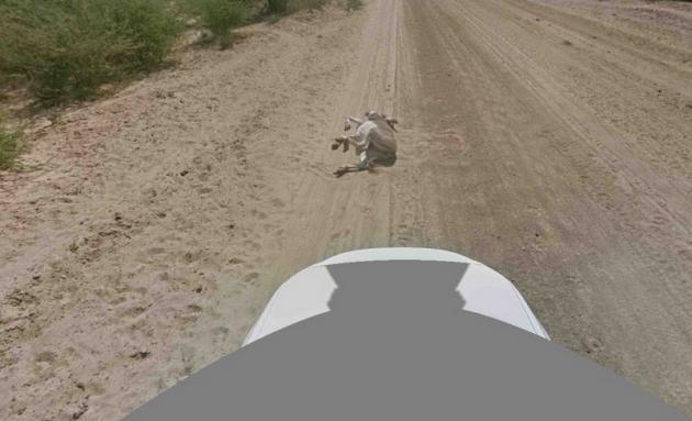 google streetview donkey