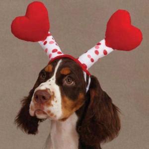 valentines dog costume
