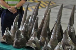 illegal wildlife trade